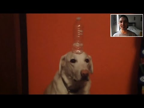 Thumbnail: My Cute 2-Year-Old Puppy can Bottle Flip!