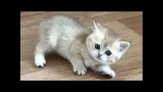 Funny Baby Animals Videos Compilation - Cute Moment of the Animals