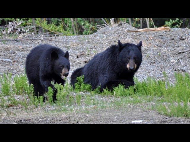 Roadtrip durch Kanada   Teil 2 -outdoor-life-