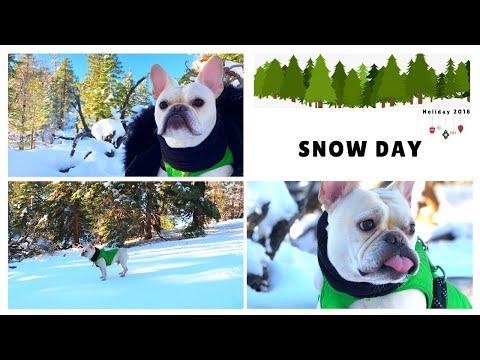 French Bulldog Snow Day  |  Frenchie Trekker TV 🎄Vlogmas Day 10