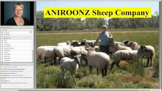Copper and Nutritional Considerations of Handspinning Sheep