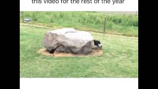 the cutest and most light-hearted video on the internet thumbnail