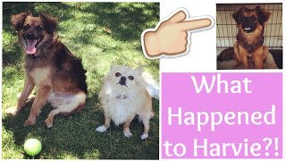 What Happened to Harvie? | Rebecca Louise