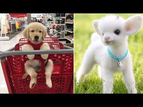 Baby Animals 🔴 Funny Cats and Dogs Videos Compilation (2019) Perros y Gatos Recopilación #9