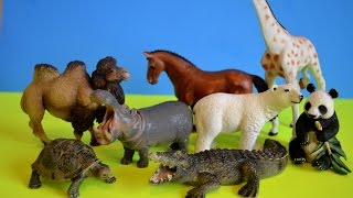 Learn Names &Sounds Of ZOO Animal-Safari-Schleich Toys Learning -Kids Z Fun