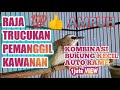 Suara Pikat Trucukan Ribut Kombinasi Burung Kecil  Mp3 - Mp4 Download