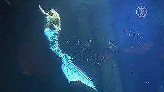 В Париже завелась русалка (новости)(http://ntdtv.ru/ В Париже завелась русалка. Посетителям парижского океанариума предлагают завораживающее зрелище..., 2014-08-15T08:53:59.000Z)