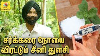 சர்க்கரை நோயை விரட்டும் சீனி துளசி   Seeni Tulasi benefits : Interview   Jaswant Singh Garden