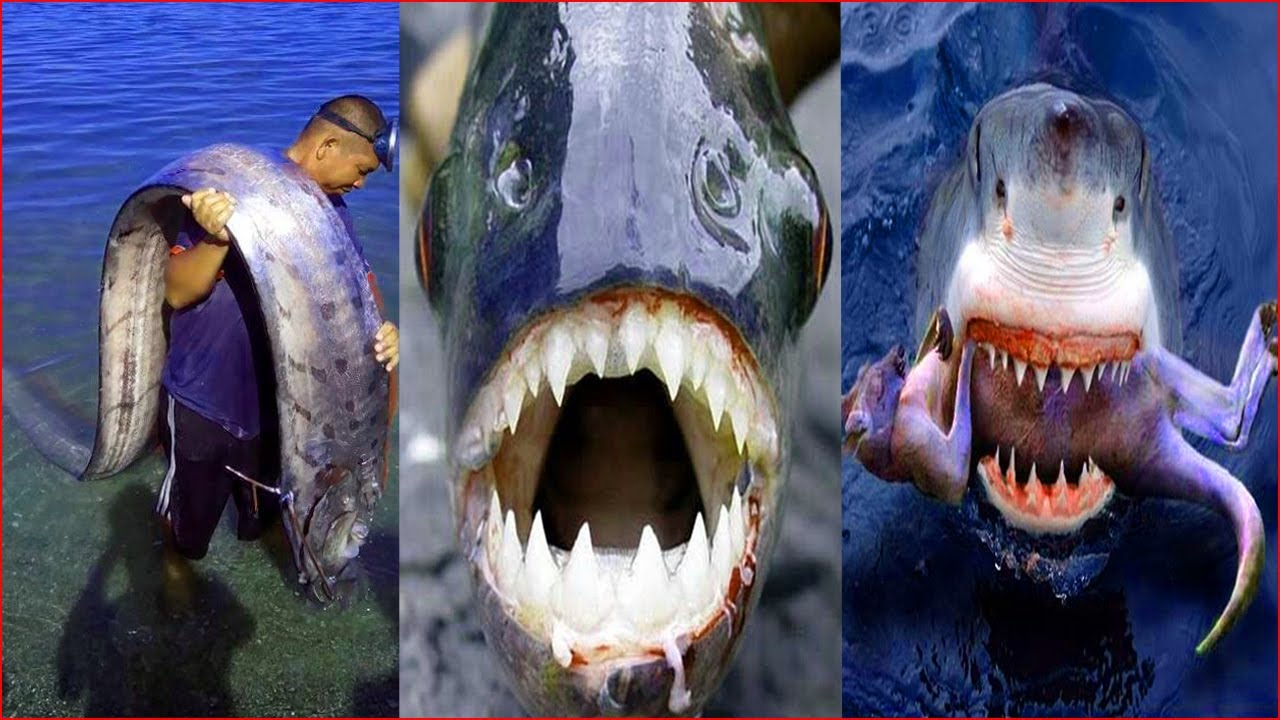 Catching Seafood 🦀🐙 ASMR Relaxing (Catch Shark , Catch Fish ,Deep Sea Monster ) - Tik Tok #154
