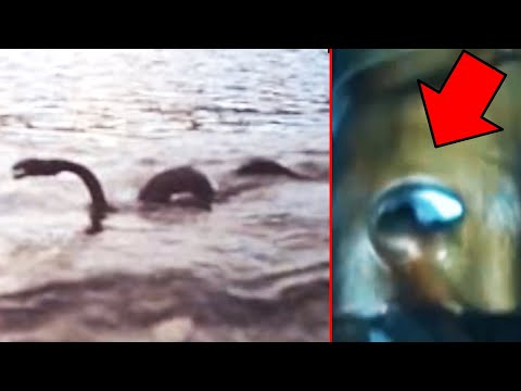 10 Giant Mysterious Water Creatures Caught On Camera!