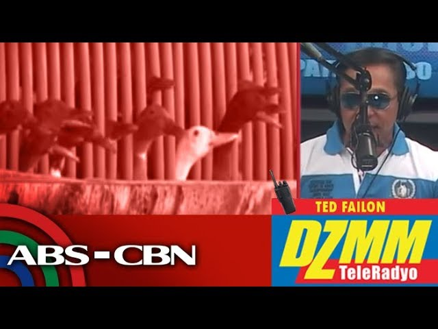 DZMM TeleRadyo: Gov't confirms poultry deaths in Nueva Ecija