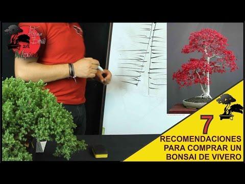 Junipero de planta de vivero a bonsai doovi for Como iniciar un vivero