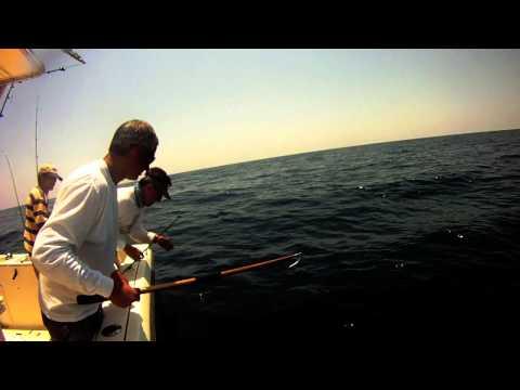 Team Fishless Bonita
