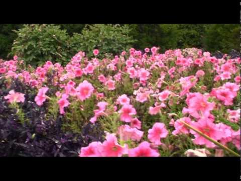 Burpee Home Gardens Flowers Youtube