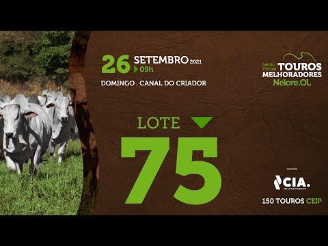 LOTE 75 - LEILÃO VIRTUAL DE TOUROS 2021 NELORE OL - CEIP