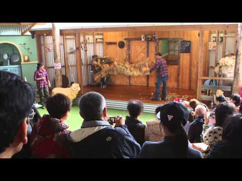 Tourism Excellence - Maru Koala Park