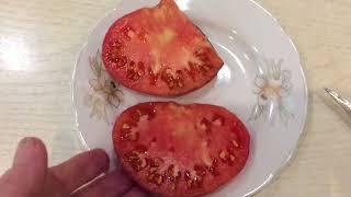 Первые томаты начинают созревать.