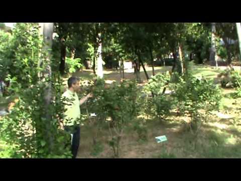 DENDROS di ANTIMO PALUMBO - Nominare gli alberi