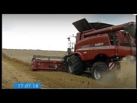 ТРК ВіККА: Черкаські аграрії прогнозують більший «коровай», ніж минулоріч