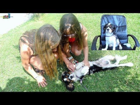 Kelebek Çiftliğinde Gezinti Patron Köpek Sevimli Tavşanlar Paytak Ördekler Eğlenceli Çocuk Videosu