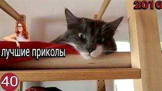 Лучшие видео приколы 2016!!!Декабрь