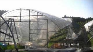 苺ハウスへのビニール張りです 苺通販 苺一枝http://www.yukimaru151a.com/