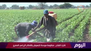 اليوم - في عيد الفلاح الـ 67 .. القطاع الزراعي يعود إلى سابق عهده