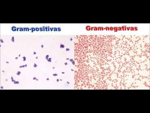 laboratoire de biologie coloration de gram capsule 1 - Coloration Gram