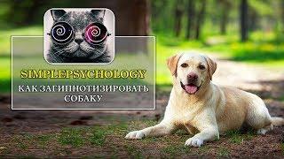 Гипноз животных. Как загипнотизировать собаку?