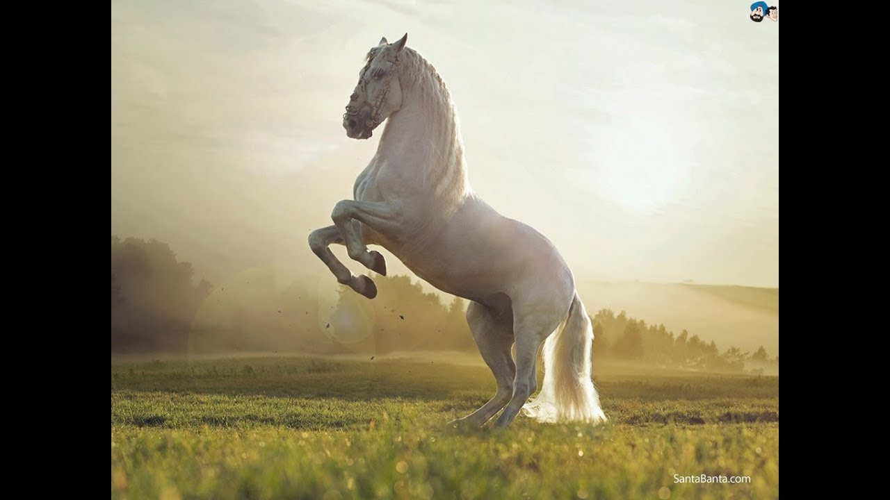 Beautiful Horse With Friendly Nature