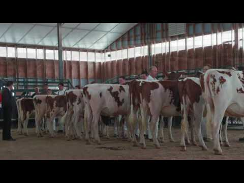 Perth County Holstein Club 100th Anniversary: A Walk Down Mammary Lane with Gary West