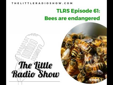 TLRS Ep.61: Bees are endangered