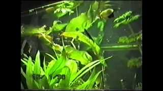 Аквариум,мой аквариум-травник.100 л.Своими руками.Как это было в 90-ых