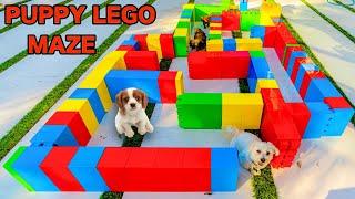 PUPPIES VS GIANT LEGO MAZE