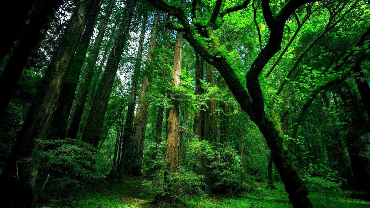 Rahatlatıcı orman ve kuş sesleri | relaxing forest sounds |#relaxingsounds #1080pnature #kuşsesi #HD
