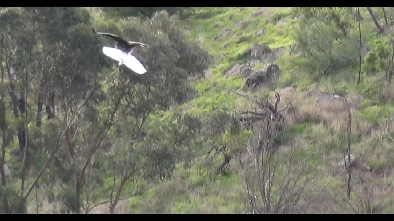 Download Eagle Kills Drone