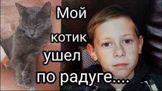 Друзья, помните моего кота Феликса? Он ушел на радугу... Мама принесла нового котенка