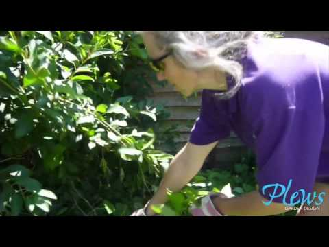 Bindweed (a how to)