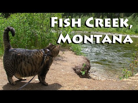 All Along The Fish Creek in Montana!