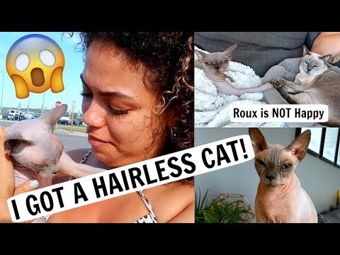 I GOT A HAIRLESS CAT! Introducing Two Older Cats :/