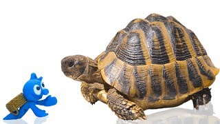 TINY PET CARE BABY SEA TURTLE 💖 CLAY MIXER Play Doh Stop Motion