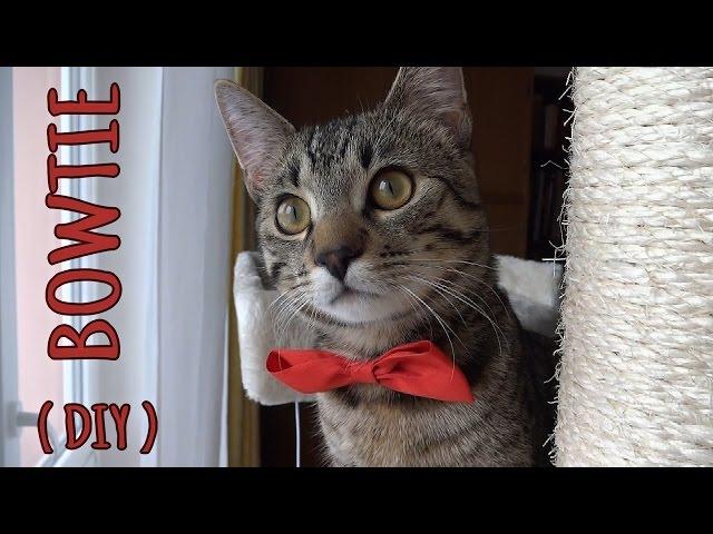 Cat bowtie (DIY)