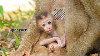 Super cute very tiny baby monkey Allen - Allen he has  welfare from his mother