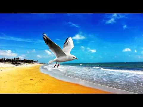 Nature Sound With Music: Ocean Waves Calming Sounds Of The Sea, Ocean Waves Sounds with Seagulls
