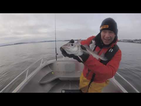 How To Fish For Haddock-Boat Fishing Tips