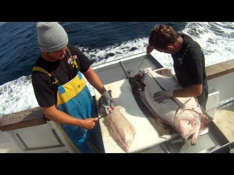 Filleting Giant California Halibut - 57lbs - Mirage Sportfishing - Channel Islands Sportfishing