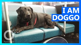 Dog takes bus herself every day to hit the dog park  TomoNews