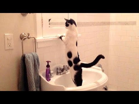 NOW is TIME TO LAUGH! - Super funny DOGS, CATS & BIRDS