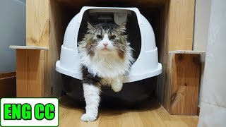 "Installing a large litter box"" Mega Comfy""! How is the reaction of Boss Cat?【Eng CC】"