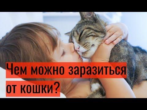Кошки болеют ли кошки туберкулезом